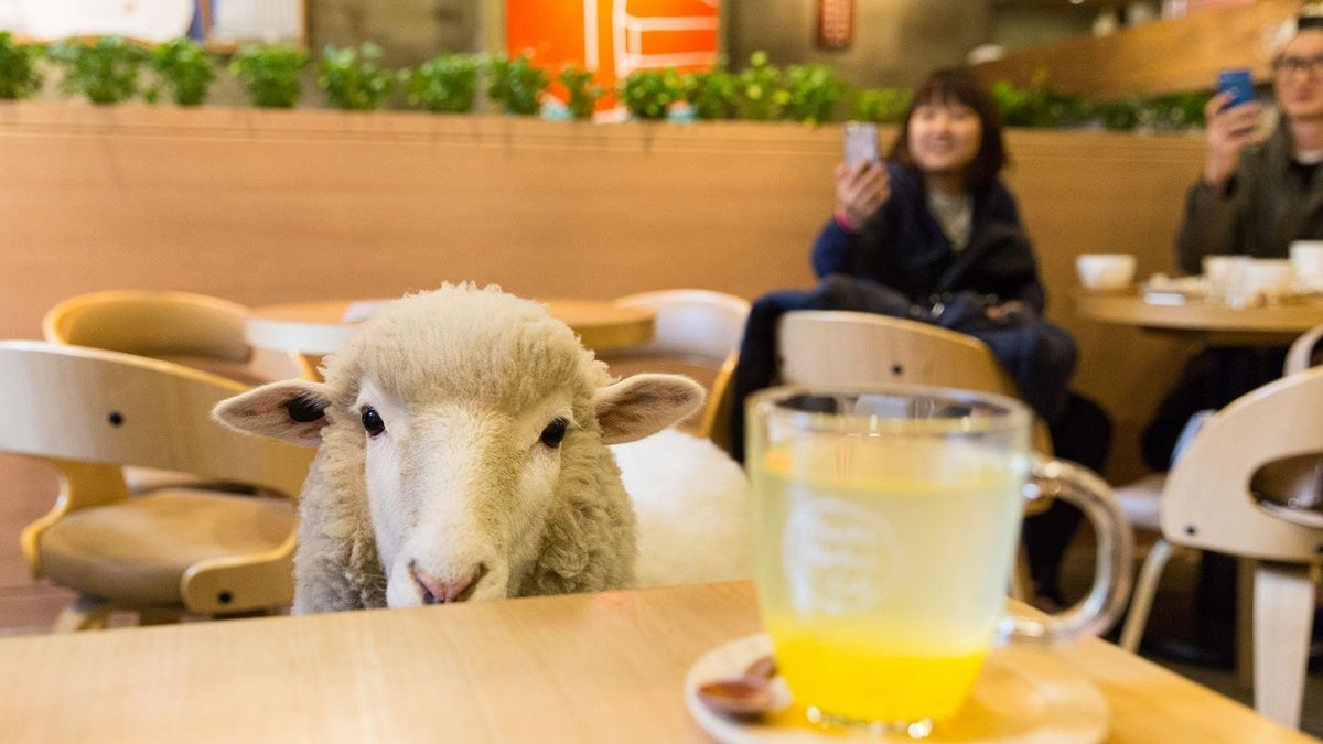 9 Animal Cafes That We Wish We Had In North America