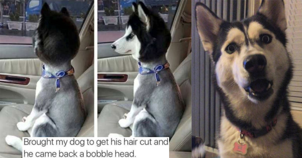 16 Times Dogs Came Back With Haircuts That Hurt Our Souls