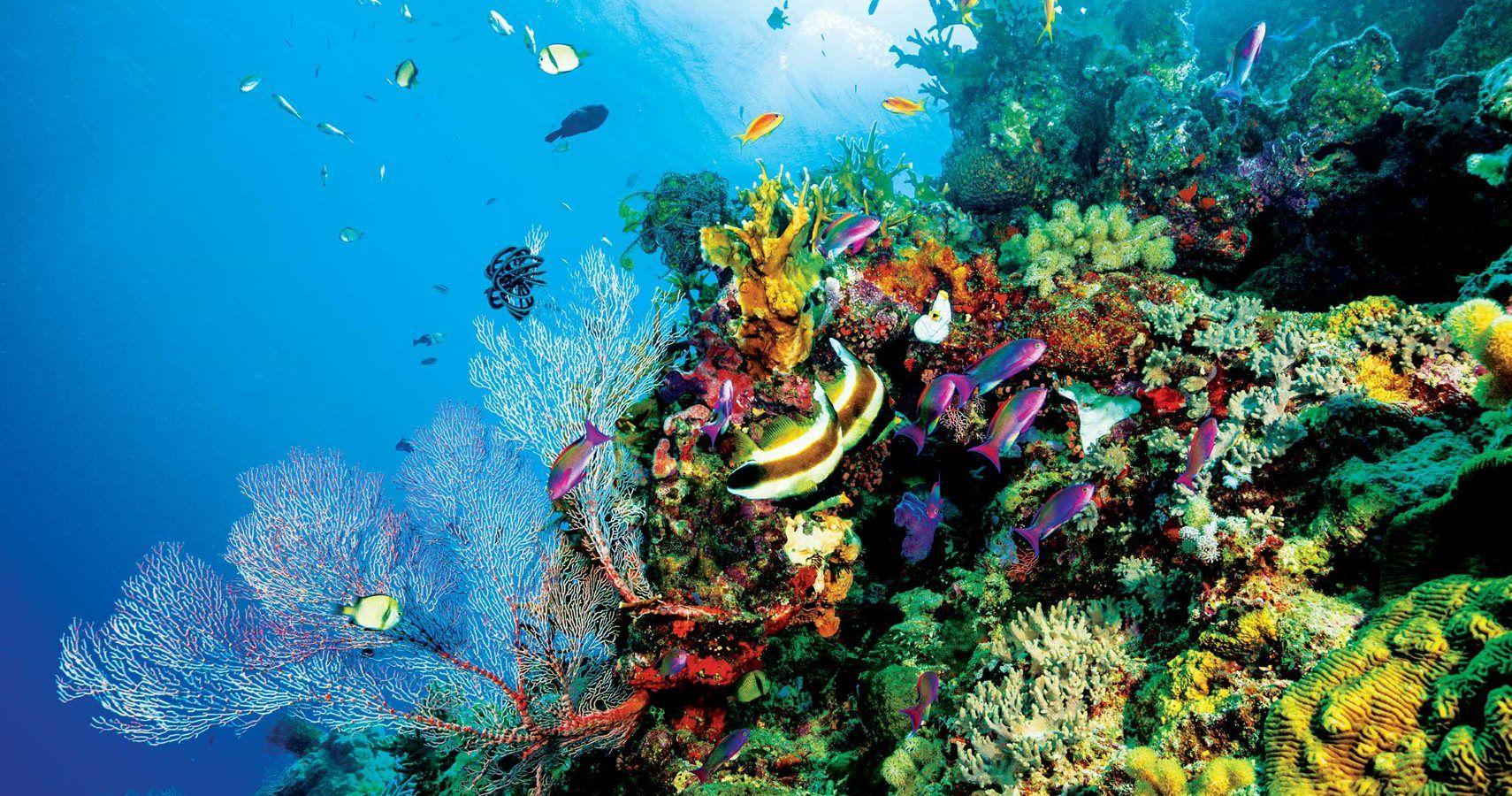 Florida Town Set To Ban Coral Reef-Killing Sunscreens