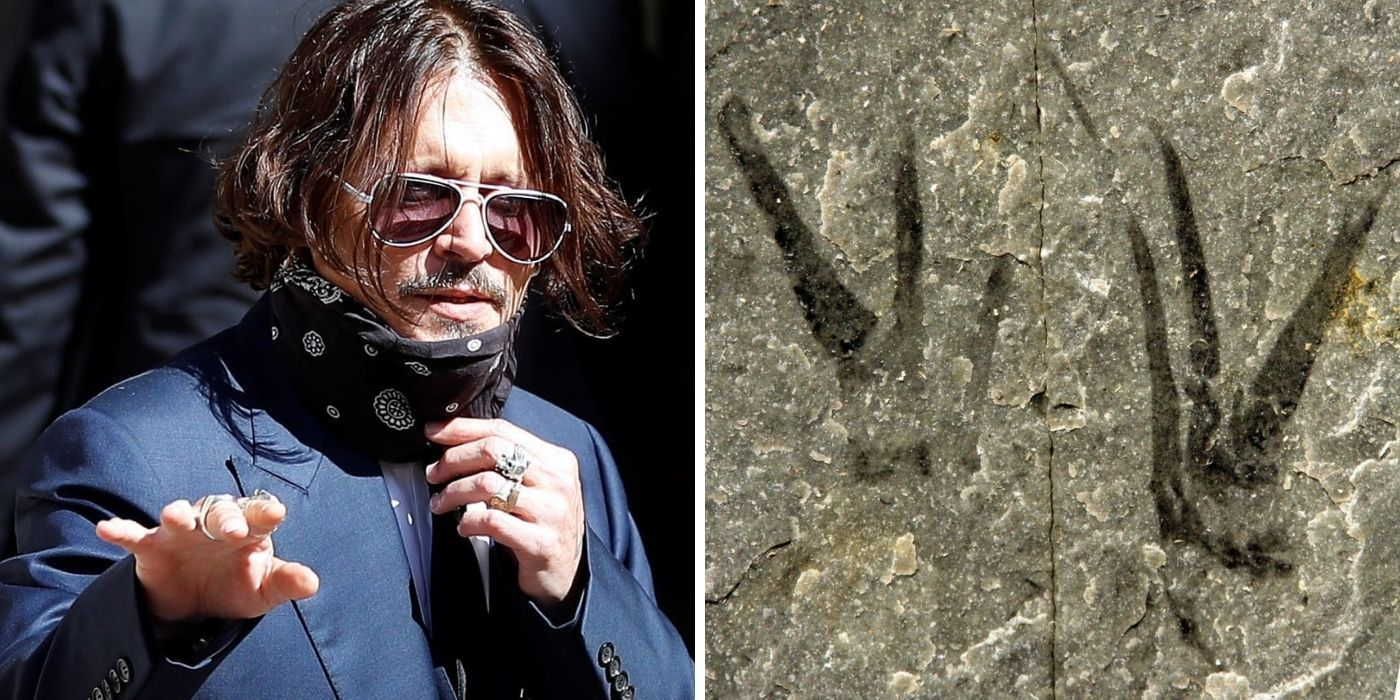 Here's Why Johnny Depp Got A Fossil Named After Him   TheThings